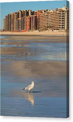 Canvas Print featuring the photograph Seagull Motel by Alicia Knust