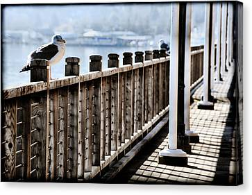 Seagull On The Boardwalk Canvas Print by Sally Bauer