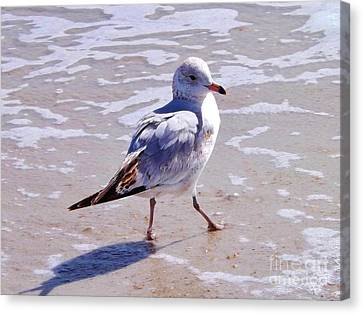 Seagull On The Run Canvas Print by Brigitte Emme