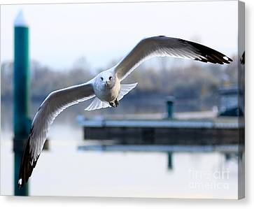 Seagull Over The Pier Canvas Print
