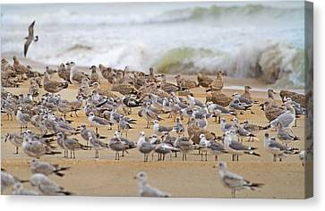 Flying Seagull Canvas Print - Seagull Paradise by Betsy Knapp
