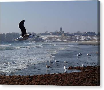 Seagull Canvas Print by Robert Nickologianis