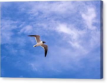 Canvas Print featuring the photograph Seagull by Sennie Pierson