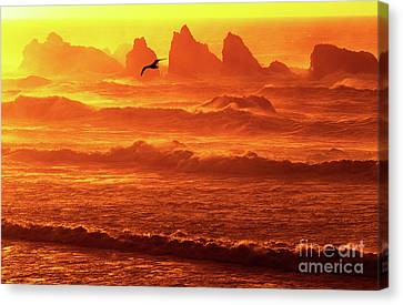 Canvas Print featuring the photograph Seagull Soaring Over The Surf At Sunset Oregon Coast by Dave Welling