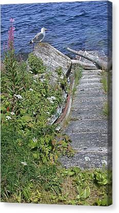 Seagull Steps Guard Island Alaska Canvas Print by Bellesouth Studio