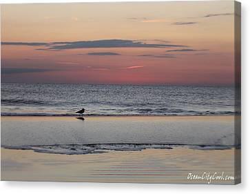 Seagull Strolls The Seashore Canvas Print by Robert Banach