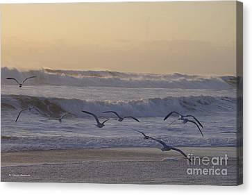 Canvas Print - Seagull Sunrise by Tannis  Baldwin