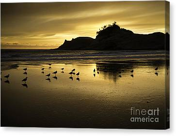 Seagull Sunset At Cape Kiwanda Canvas Print by Tim Moore