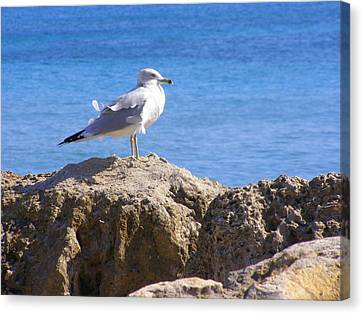 Canvas Print featuring the photograph Seagull by Artists With Autism Inc
