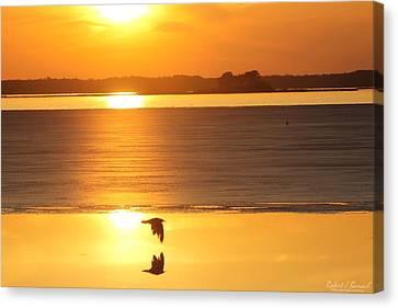 Seagull Through Sunset Canvas Print