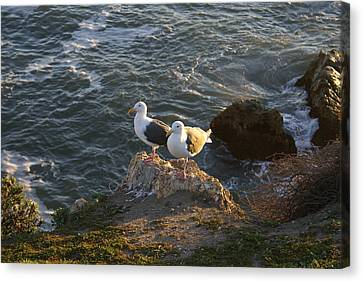 Flying Seagull Canvas Print - Seagulls Aka Pismo Poopers by Barbara Snyder