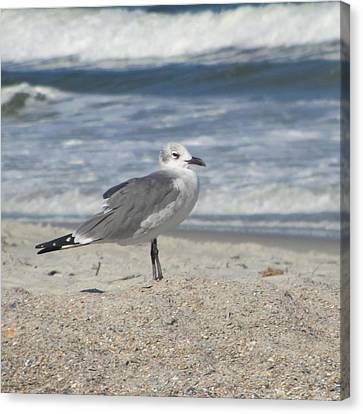 Seagulls At Fernandina 2 Canvas Print by Cathy Lindsey