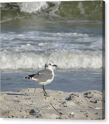 Seagulls At Fernandina 6 Canvas Print