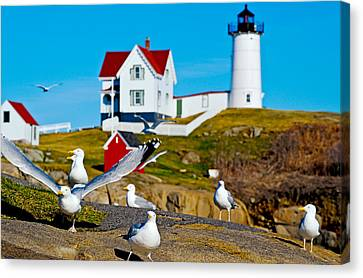 Seagulls At Nubble Lighthouse, Cape Canvas Print