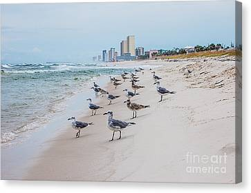 Panama City Beach Canvas Print - Seagulls Convention by Debbie Green
