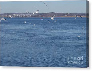 Seagulls Everywhere Canvas Print by John Telfer