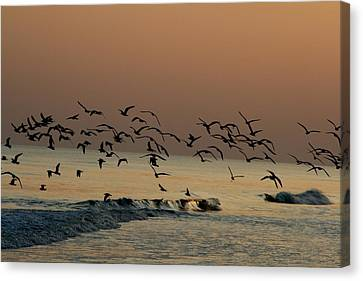 Seagulls Feeding At Dusk Canvas Print by Beth Andersen