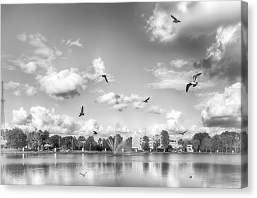 Seagulls Canvas Print by Howard Salmon