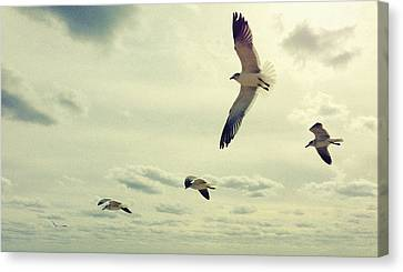 Seagulls In Flight Canvas Print by Bradley R Youngberg