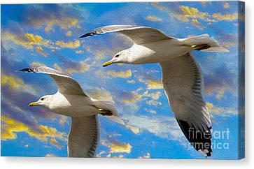 Caribbean Canvas Print - Seagulls In Flight by Jon Neidert