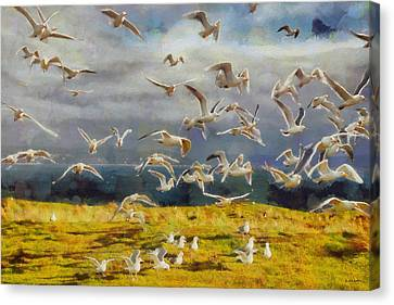 Seagulls Of Protection Island Canvas Print