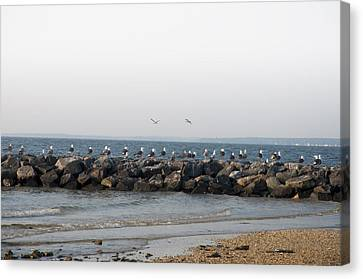 Seagulls On A Jetti Canvas Print