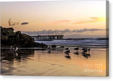 Seagulls On The Coast Canvas Print