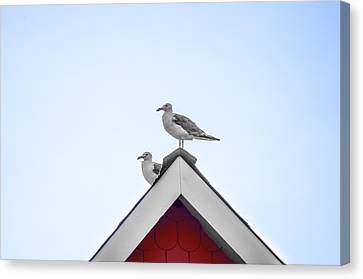 Seagulls Perched On The Rooftop Canvas Print by Bill Cannon