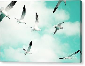 Seagulls Soaring Canvas Print by Kim Fearheiley