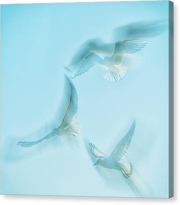 Flying Seagull Canvas Print - Seagulls  by Stelios Kleanthous