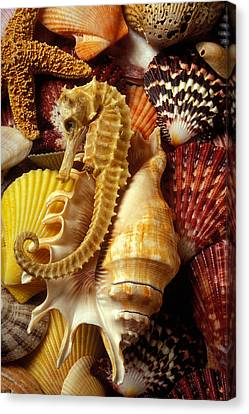 Nature Study Canvas Print - Seahorse Among Sea Shells by Garry Gay