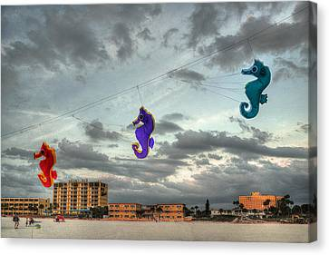 Seahorse Dance Canvas Print by William Fields