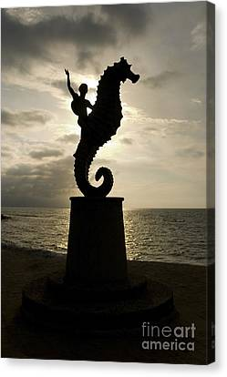 Seahorse Sunset Canvas Print by Mark Baker