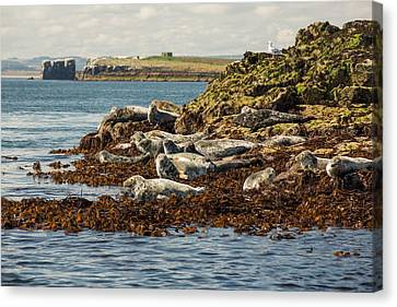 Seahouses On The Northumberland Coast Canvas Print by Ashley Cooper