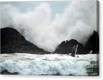 Seal Rocks Canvas Print by Sheldon Blackwell
