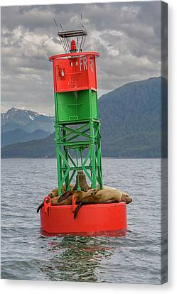 Seals Resting On Buoy Canvas Print