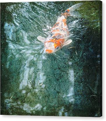 Canvas Print featuring the photograph Searching by Sally Banfill
