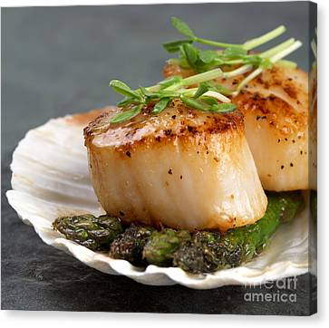 Seared Scallops Canvas Print by Jane Rix