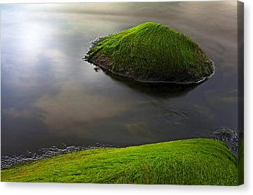 Seascape Seaweed On Rocks Canvas Print by Dirk Ercken