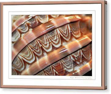 Seashell Abstract 2 Canvas Print by Kaye Menner