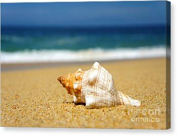 Salt Water Canvas Print - Seashell by Aged Pixel