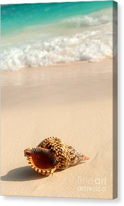 Seashell And Ocean Wave Canvas Print