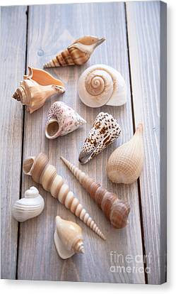 Canvas Print featuring the photograph Seashell Collection by Jan Bickerton