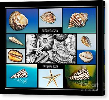 Seashell Collection Canvas Print by Kaye Menner