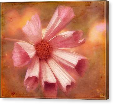 Seashell Cosmos Canvas Print by Douglas MooreZart