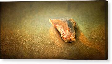 Canvas Print featuring the photograph Seashell by Joye Ardyn Durham