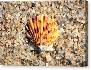 Seashell On Sandy Beach Canvas Print by Carol Groenen