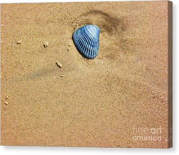 Seashell Canvas Print by Venus