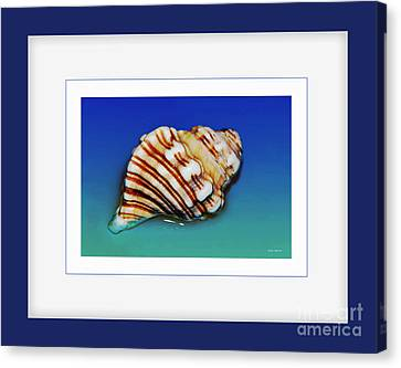 Seashell Wall Art 1 - Blue Frame Canvas Print by Kaye Menner