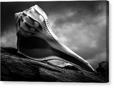 Seashell Without The Sea 3 Canvas Print by Bob Orsillo